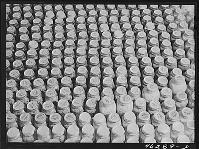 Greene County. Canned goods made by a Negro FSA (Farm Security Administration) family