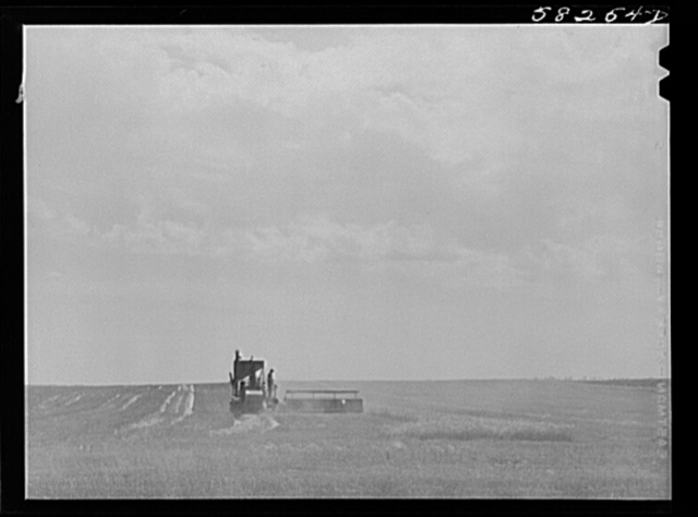 Harvesting wheat with a combine, getting about forty bushels per acre, a bumper wheat crop. About eight miles north of Culbertson, on the road to Froid, Montana