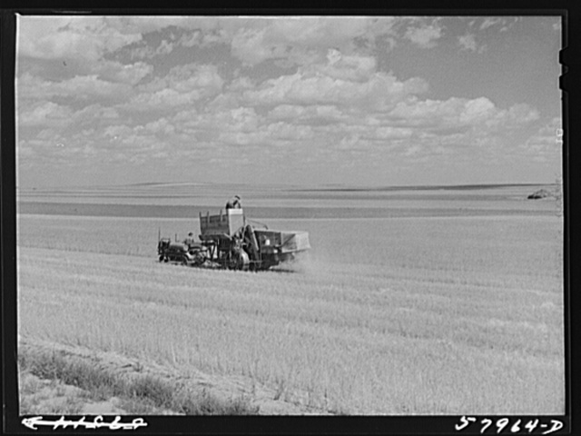 Harvesting wheat with combines on Schnitzler Corporation ranch, Froid, Montana. There are about 2800 acres on this part of the ranch and they are getting over forty bushels to the acre. It is one of the largest wheat ranches in the West