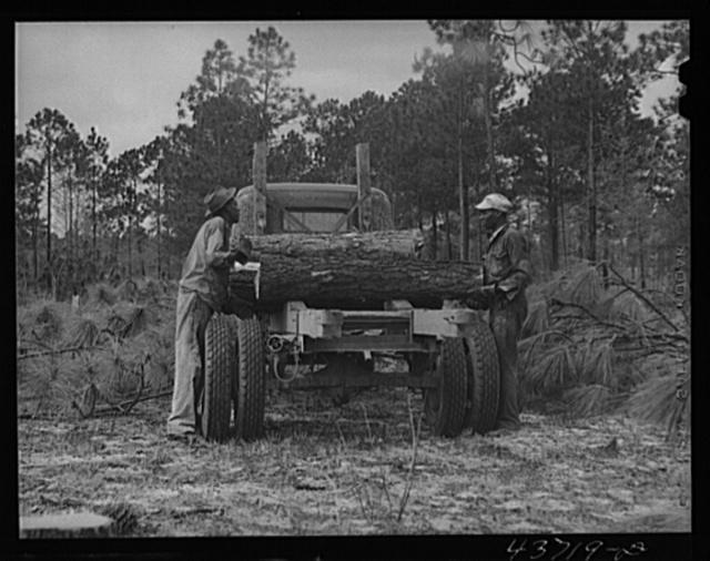 Hauling logs from Hazlehurst Farms Inc., Hazlehurst, Georgia