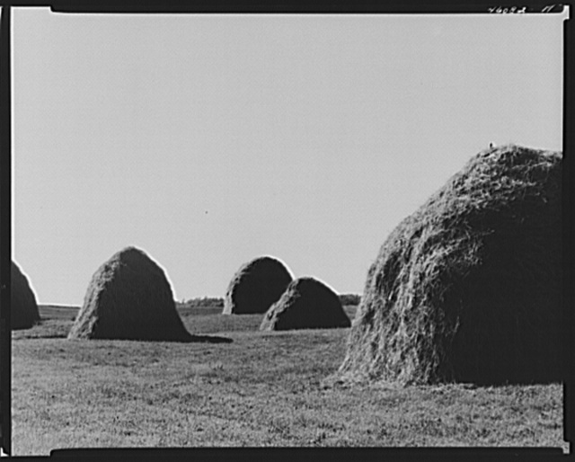 Hay stacks in a field near Essex Junction, Vermont