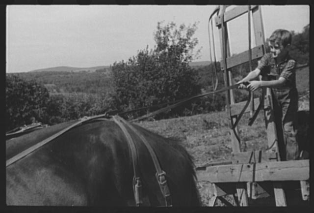 Johnny Gaynor driving a team of horses on the Gaynor farm near Fairfield, Vermont