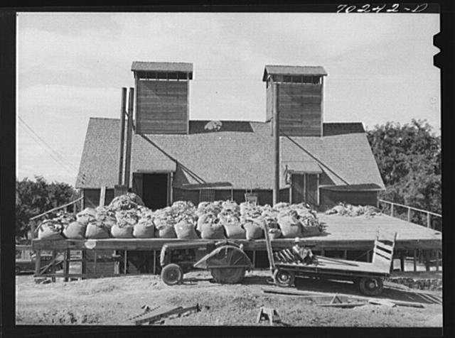 Kiln, sacked green hops in foreground. Yakima County, Washington