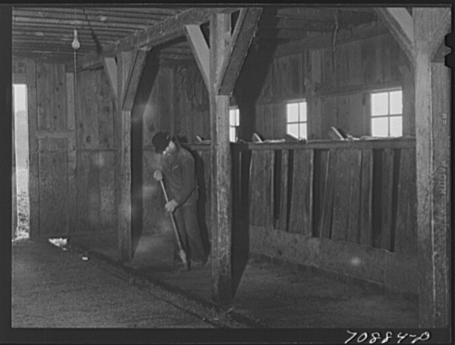 Lee Wagoner sweeps up his milking barn. Black Canyon Project, Canyon County, Idaho