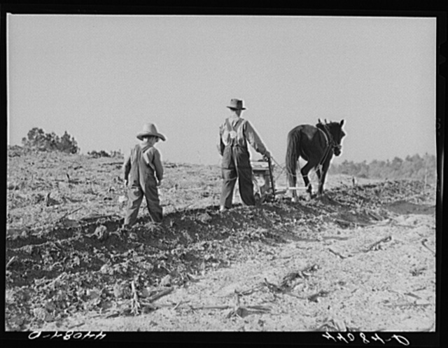 Lemuel Smith, FSA (Farm Security Administration) borrower, plowing; his son, Colie, planting peas. Carroll County, Georgia