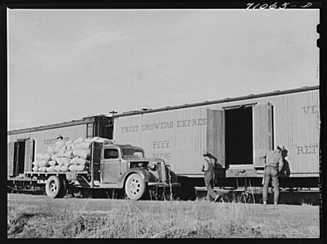 Loading potatoes into railroad car, Klamath County, Oregon. Value of potato crop in the county is more than four million dollars annually