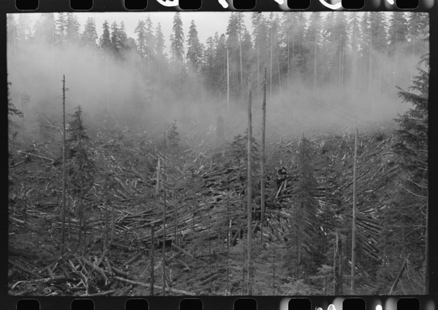Logging holdings of the Long Bell Lumber Company, Cowlitz County, Washington