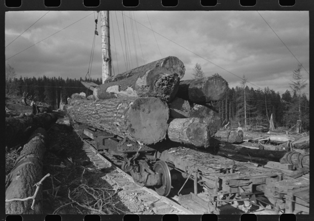 Logs on flatcar, Long Bell Lumber Company, Cowlitz County, Washington