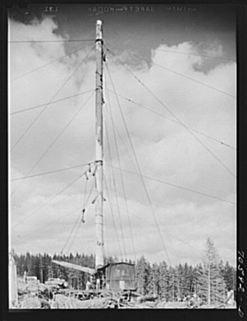 Long Bell Lumber Company, Cowlitz County. Washing spar tree used in lumbering operations