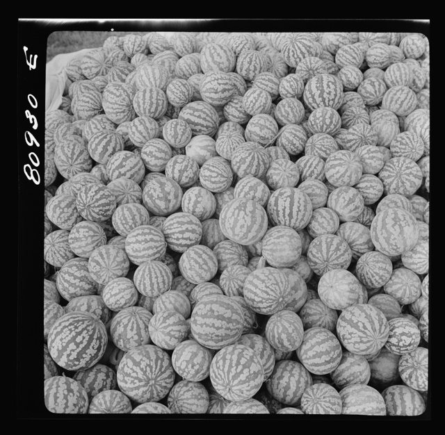 Melons piled in harvest market near Windsor Locks, Connecticut
