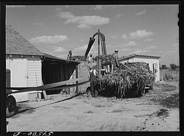 Members of the co-op filling a member's silo with corn. Two River Non-Stock Cooperative, FSA (Farm Security Administration) co-op. Waterloo, Nebraska