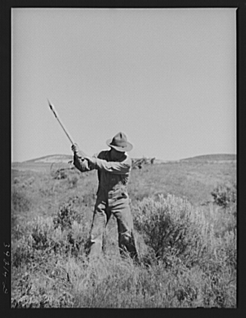 Newly-arrived farmer clearing land of sage brush. Vale-Owyhee irrigation project, Malheur County, Oregon. On the Vale-Owyhee project the average farmer has been able to clear and get into cultivation (small grain, alfalfa) forty-four acres in the first year on his farm