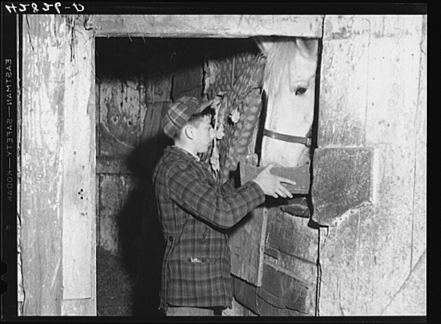 One of the sons of Mr. Anthony Forgetta, Italian vegetable farmer, feeding the horse after coming home from school. Mr. Forgetta and a daughter work at the mills nearby. Andover, Massachusetts