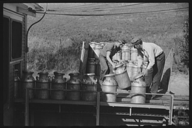 Opening milk cans at the United Farmers Coop Creamery in East Berkshire, Vermont