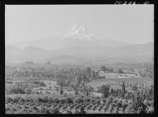Orchards in Hood River Valley. Mount Hood in background. Oregon