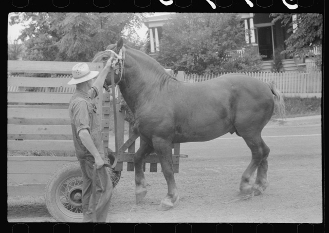 Percheron stallion brought to mare for mating, on farm near Pine Grove Mills, Pennsylvania