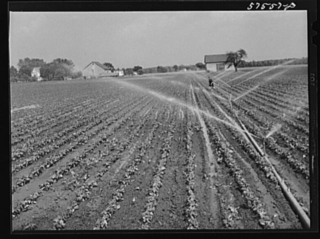 Portable irrigation unit in bean field. Starkey Farms, Morrisville Pennsylvania