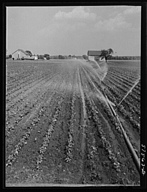 Portable irrigation unit in bean field. Starkey Farms, Morrisville, Pennsylvania