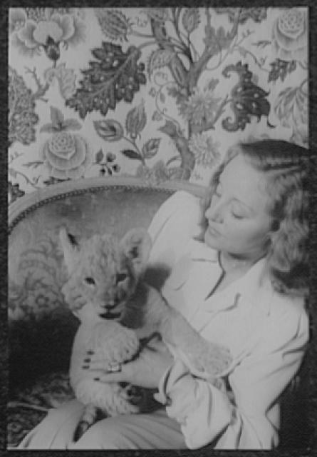 [Portrait of Tallulah Bankhead, holding lion cub Winston Churchill]