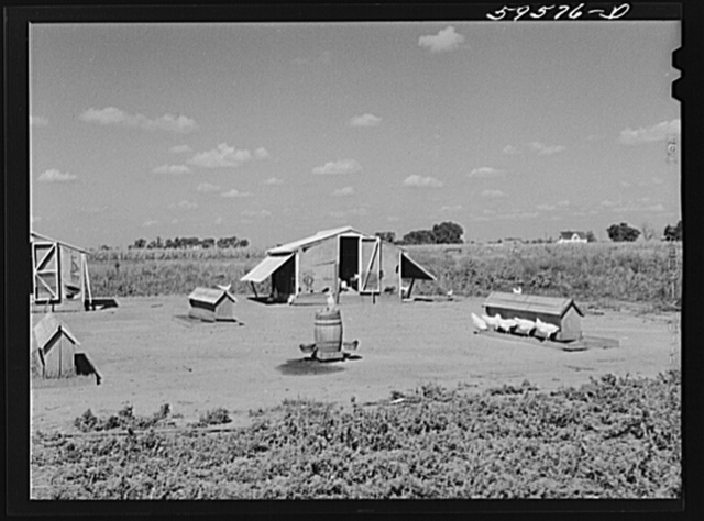 Poultry houses and barn on Two Rivers Non-Stock Cooperative, a FSA (Farm Security Administration) co-op. Waterloo, Nebraska