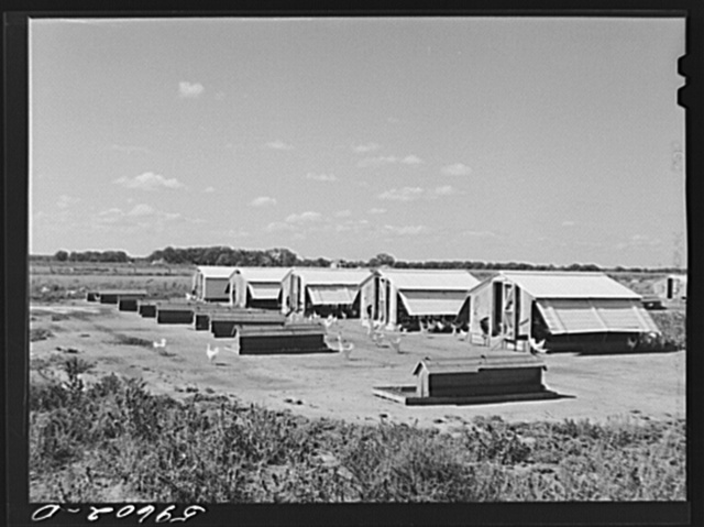 Poultry houses at Two Rivers Non-Stock Cooperative, a FSA (Farm Security Administration) co-op. Waterloo, Nebraska