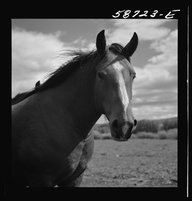 Ranch horse on grazing land near Lame Deer, Montana