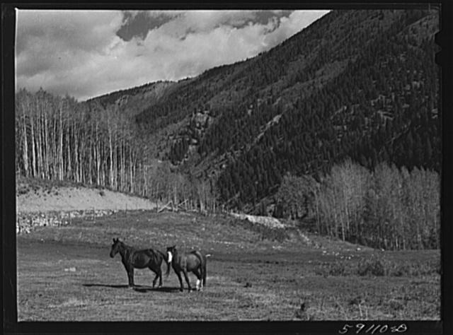 Ranch horses. Near Ashcroft, Colorado