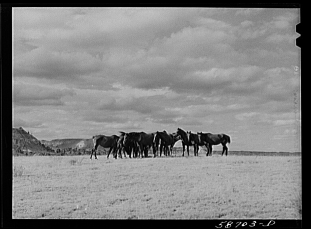 Ranch horses on grazing land near Lame Deer, Montana