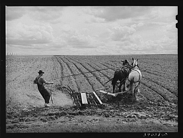 Ray Halstead making a turn while harrowing an irrigated field. He is a FSA (Farm Security Administration) rehabilitation borrower. Dead Ox Flat, Malheur County, Oregon