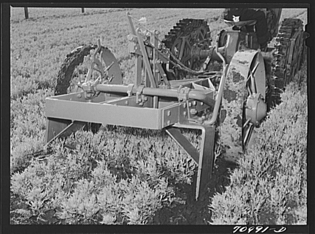 Salinas, California. Intercontinental Rubber Producers. Demonstration of digger used in guayule nursery. In actual operations, the tops of the plants are cut off by the mower before they are dug. When transplanted, the guayule seedlings weigh about two grams