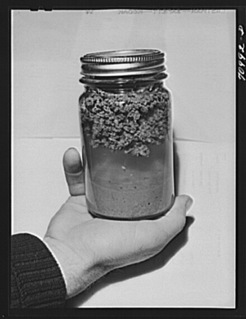 "Salinas, California. Intercontinental Rubber Producers. Laboratory exhibit. This specimen shows the ""worms"" of rubber on top and the bagasse settled to the bottom, which is exactly what happens in regular factory operations of rubber extraction"