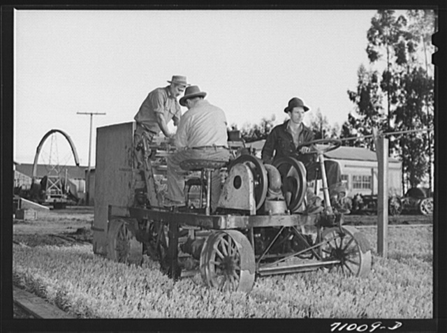 Salinas, California. Intercontinental Rubber Producers. Mower which cuts off tops of guayule seedling in the nursery before transplanting into the field