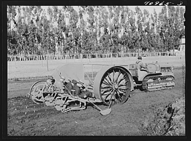 Salinas, California. Intercontinental Rubber Producers. Transplanting seedlings from the guayule nursery into the field in a demonstration. This machine as well as all others used in cultivation of guayule was designed and built mostly from standard parts at the Salinas farm