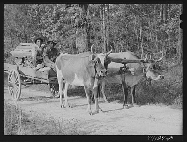 Mr  Frank Barnett and his son  Negro farmer near Scull Shoals who is