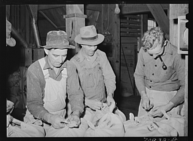Sewing up sacks of seed. Seed mill, Ontario, Oregon