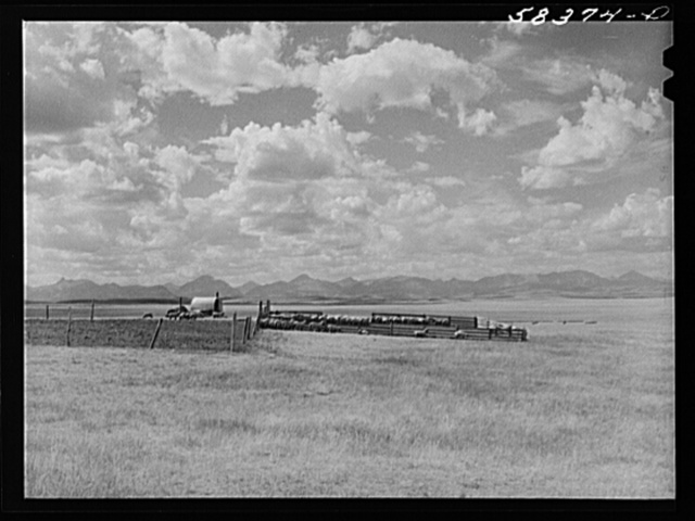 Sheepherder's wagon, flock and pen on summer grazing land northwest of Great Falls, Montana