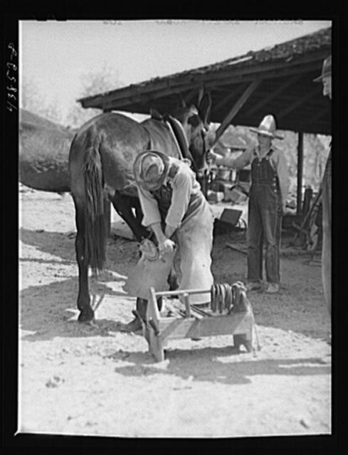 Shoeing a mule in Glenloch. Heard County, Georgia
