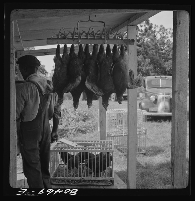 """Slaughtered chickens hanging up by """"painless killer"""". Enterprise FSA (Farm Security Administration) canning and dressing station. Coffee County, Alabama"""