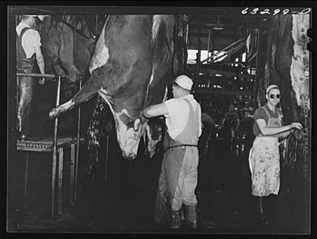 Slitting throats of cattle. Packing plant, Austin, Minnesota