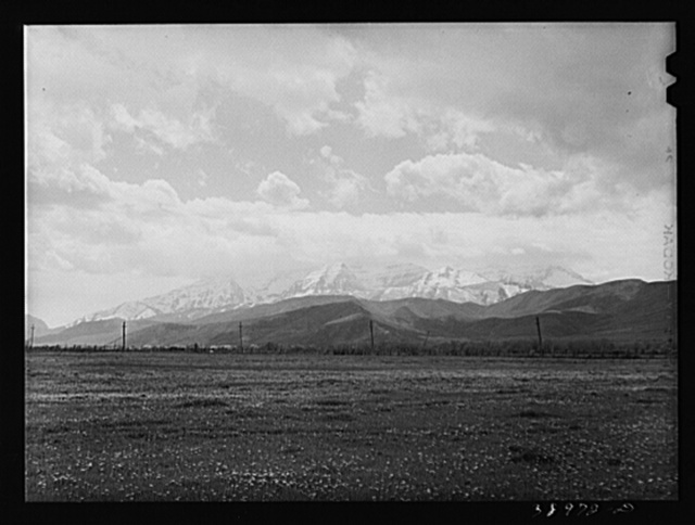 Snow-covered Uinta mountains in background, dandelions in spring pasture in foreground. Heber, Utah