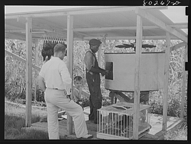 The painless killer. Enterprise FSA (Farm Security Administration) cooperative canning station. Coffee County, Enterprise, Alabama