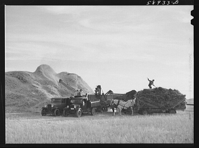 Threshing wheat on Beerman's ranch at Emblem, Wyoming. He has about 160 acres (quarter section), about forty-three in wheat, the rest in oats, beans, and alfalfa.  This year he is getting between fifty-five and sixty bushels per acre, whereas ordinarily he gets about forty bushels wheat per acre.  He has lived on the place forty years and owned it for the past twenty.