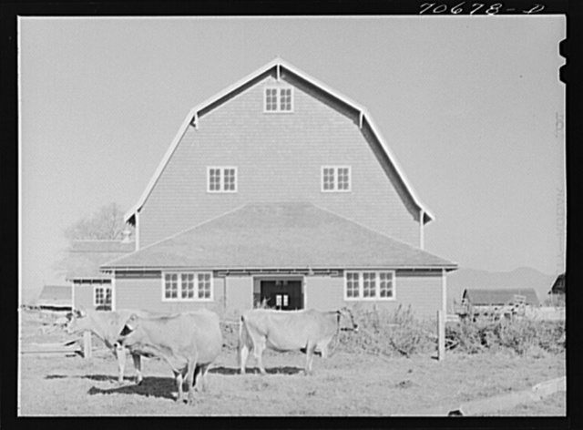 """Tillamook County, Oregon. Dairy farmer's barn and cattle. This type of barn, because of its peculiar roof shape, is known as a """"hip"""" barn"""