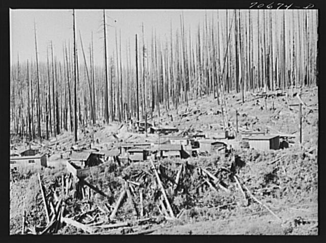 Tillamook County, Oregon. Lumber workers' housing in the Tillamook burn area