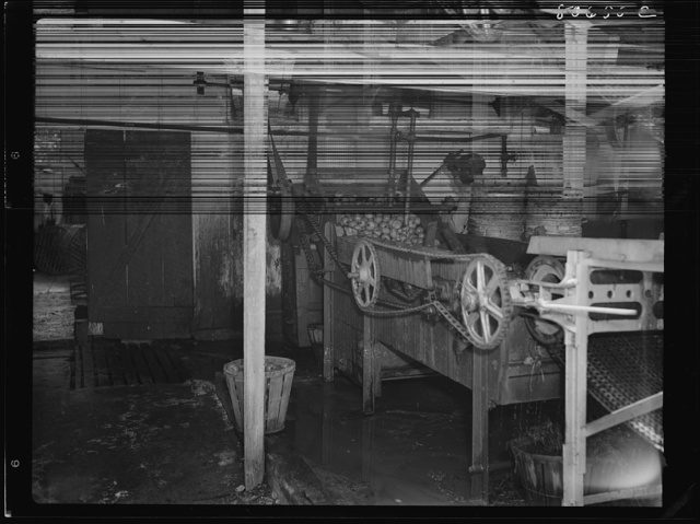 Tomatoes washing under an open shed in the Lennord Cannery. Cambridge, Maryland