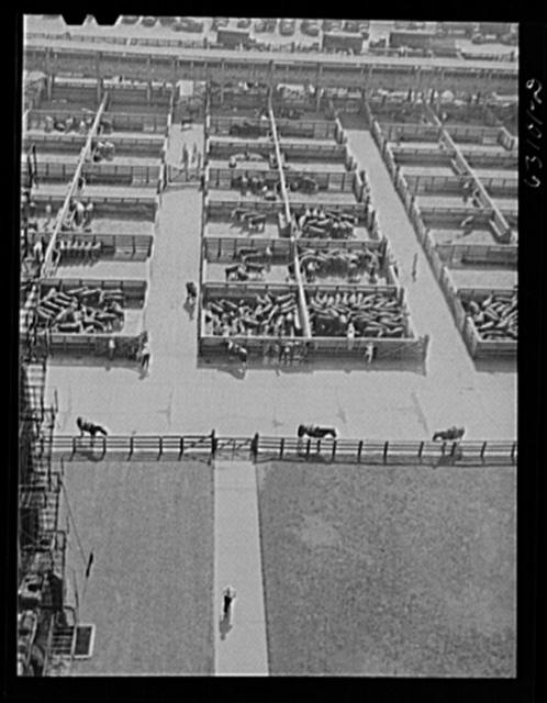 Union Stockyards. Chicago, Illinois