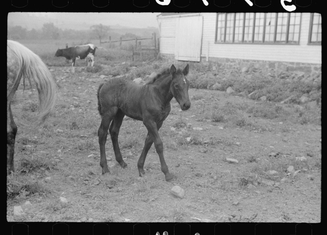 Pennsylvania photographs - Farm Security Administration / Office of War Information Photograph.