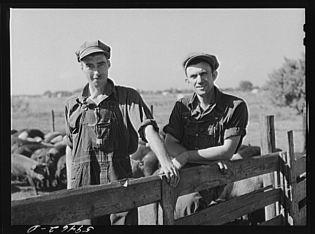 Virgil Burns and Fred Ringler, members of co-op (FSA (Farm Security Administration)) in charge of hog department. Two Rivers Non-Stock Cooperative, Waterloo, Nebraska. There are 181 head of hogs, average weight 160 pounds. There are also 40 sows and 219 suckling pigs