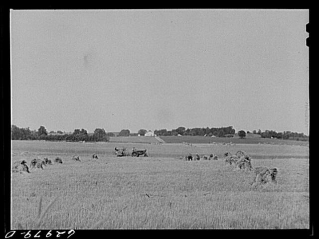 Wheat harvest. Monroe County, Indiana