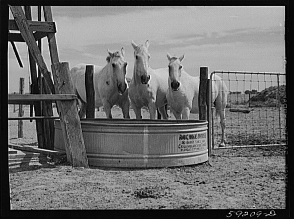 Work horses belonging to Scottsbluff Farmsteads cooperative enterprise. FSA (Farm Security Administration) project. Scottsbluff, Nebraska